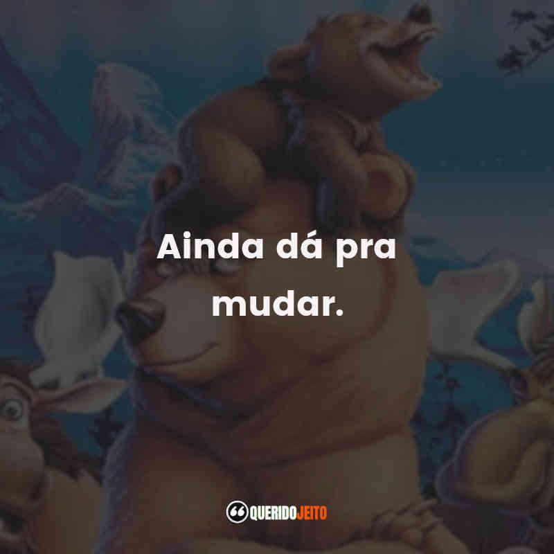 Frases Irmão Urso
