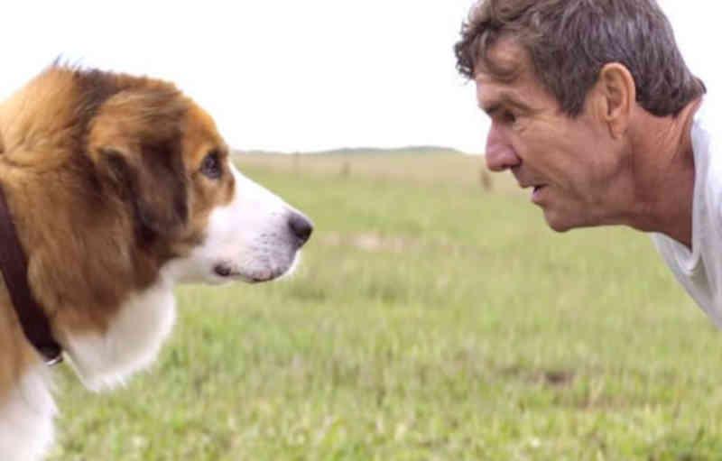 Frases do Filme Quatro Vidas de um Cachorro