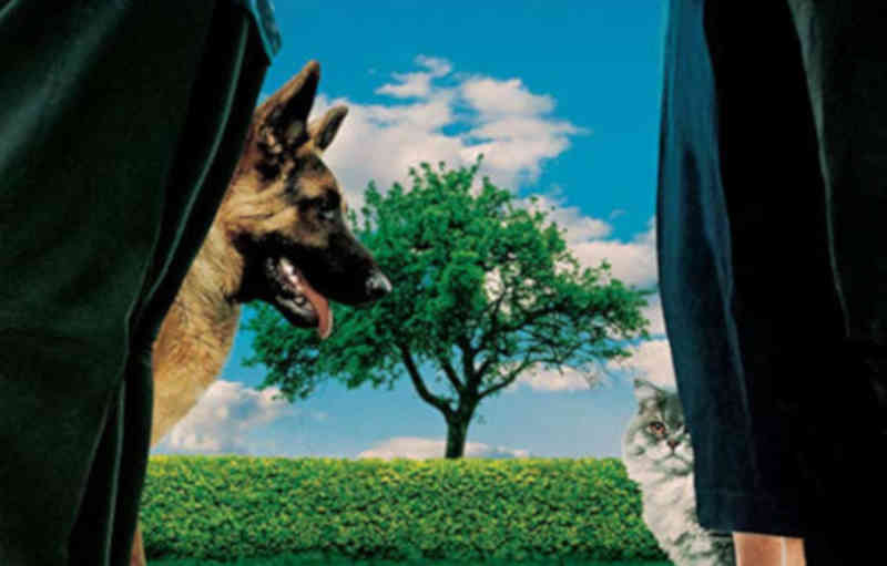 Frases do Filme A Sombra da Árvore