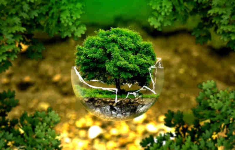 Frases para o Dia do Meio Ambiente